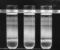 Image of test tubes filled with liquid.