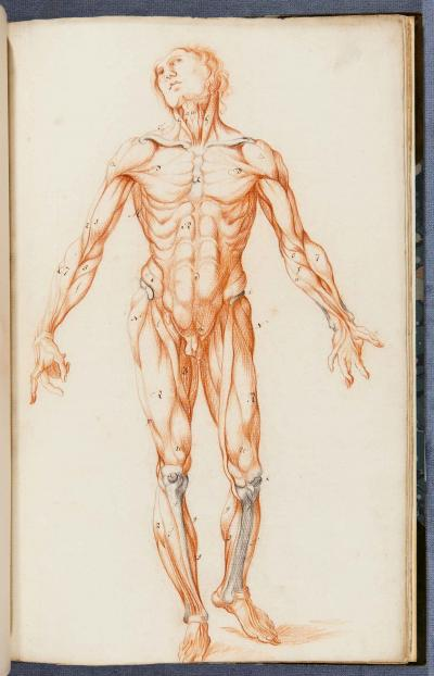 An image from Gracht Anatomie