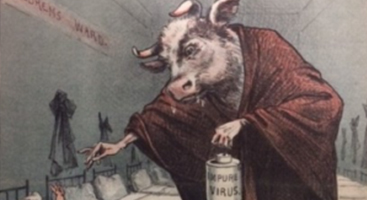 illustration of person with cow head