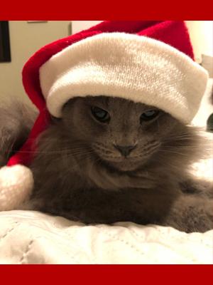 Hamilton the cat