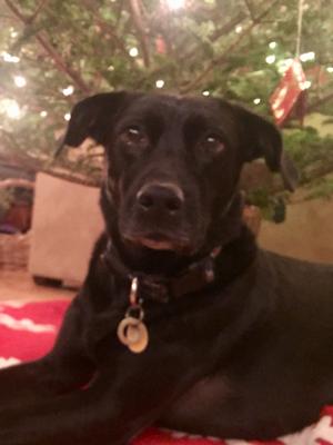 Lulu the dog