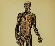 Image of the human body.