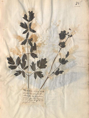 image of dried flowers on page