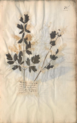 Image of dried plant on page