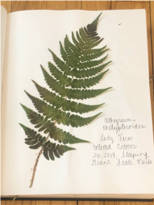 Pages from the author's personal herbarium, 2020
