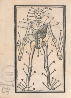 Skeleton from Summula per alphabetum super plurimis remediis (around 1500)